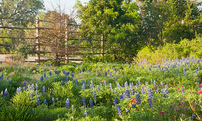 Wildflower Center Austin, Texas.