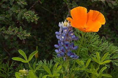 Complimentary colors, Fredricksburg, Texas