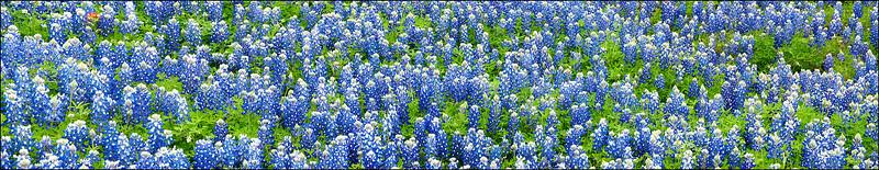 Bluebonnets, Llano, Texas