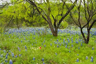 Llano, Texas