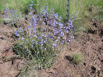 Wildflowers of the Zumwalt