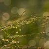 Glittering Grass 4