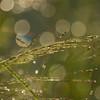 Glitter Grass 3
