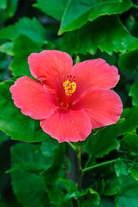 Hibiscus - Shalimar Cottages - Sanibel Island, FL