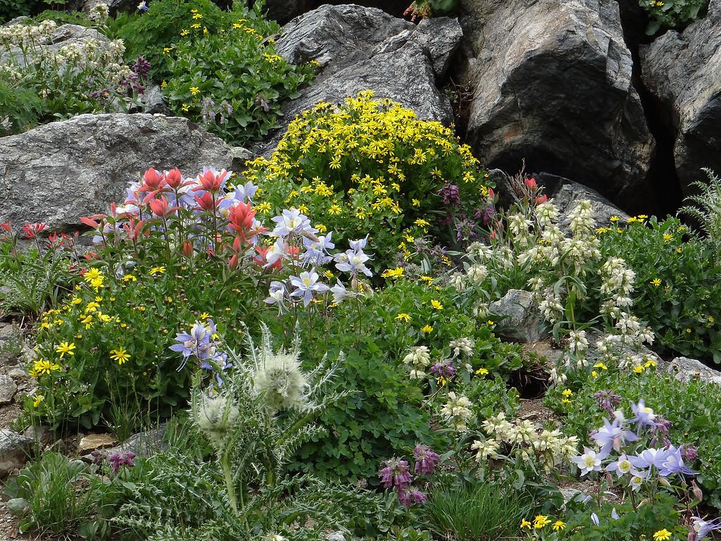 A rare garden