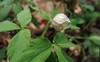 Wildflower  Pilgrimage - UNC-A