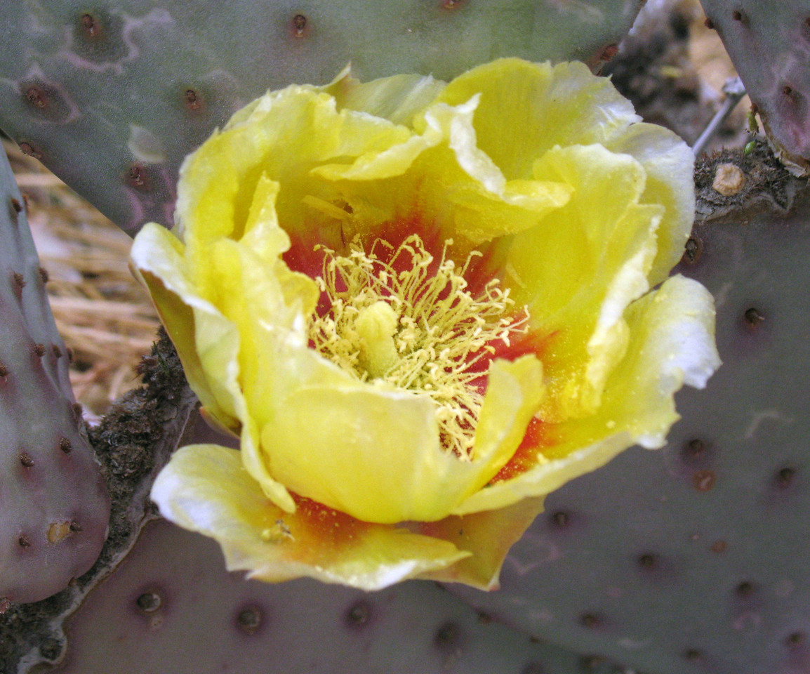 Ethel M. Cactus Garden<br /> Henderson, NV<br /> April 23, 2007