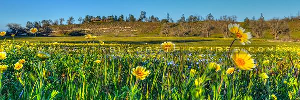pano-wildflowers_6765