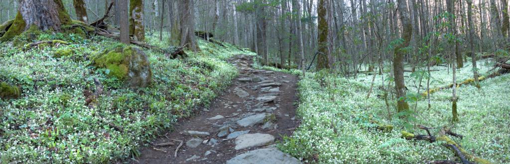 Porter's Creek Trail GSMNP