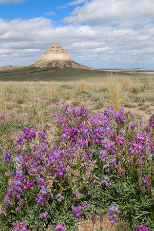 Pink Sea, Pawnee Buttes National Grassland, CO