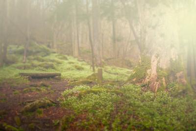 Cove Hardwood Trail in Fog