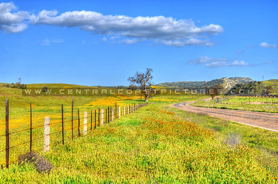 wildflowers road fence tree 3517-