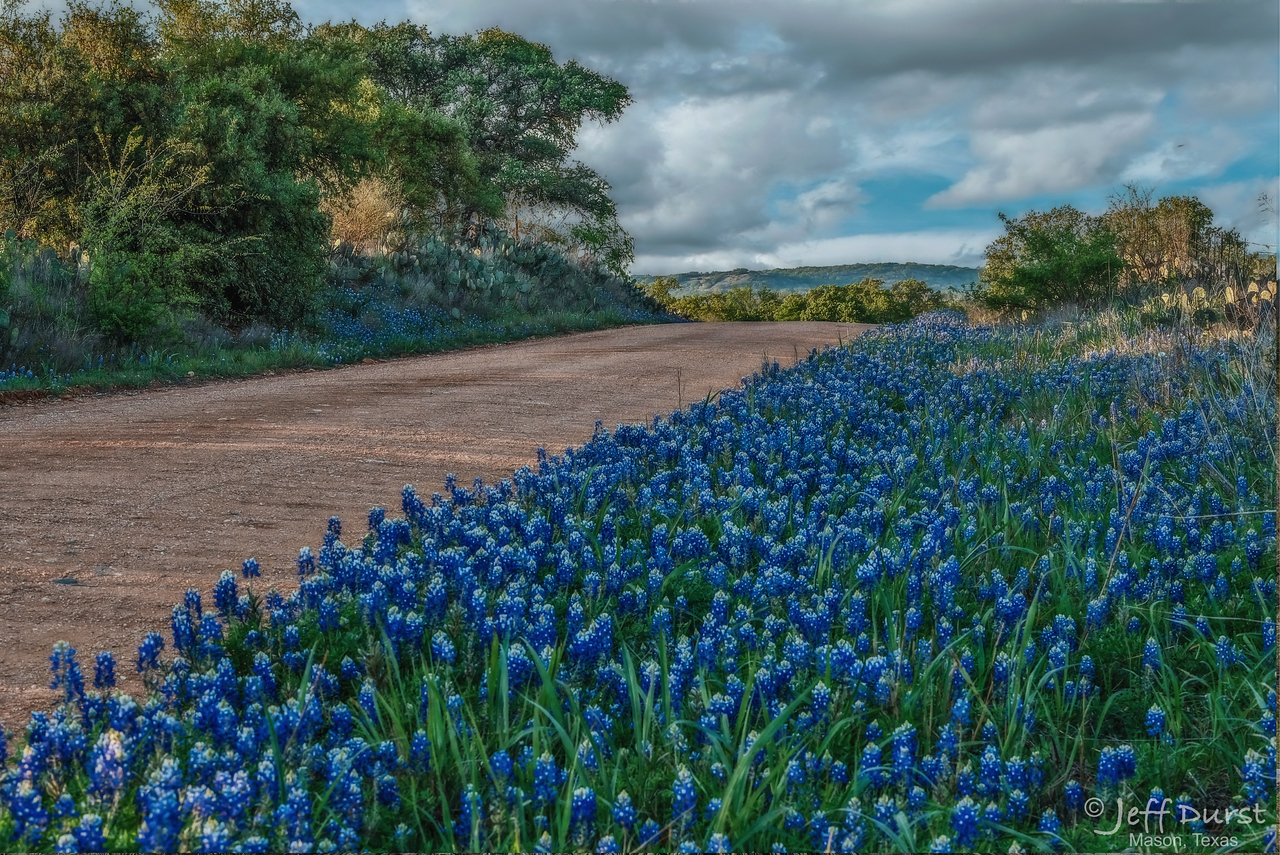 Bluebonnets Behrens Road 17Mar-1-1-198