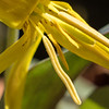 flower         2110