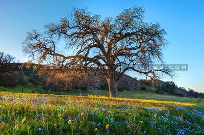 oak-tree-wildflowers_6755