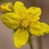 flower      210