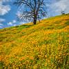Columa Poppies and tree vert