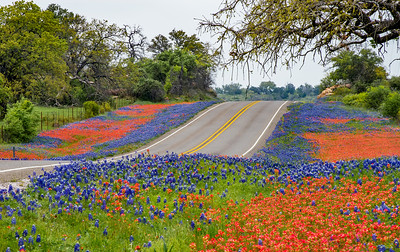 Bluebonnets and Paintbrush along Hwy 16 south of Llano, Texas