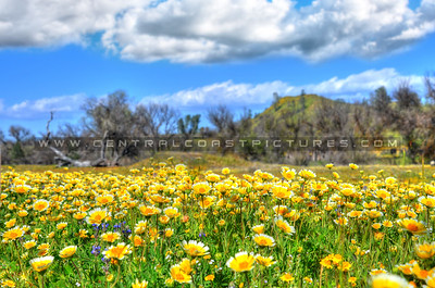 wildflowers 3466