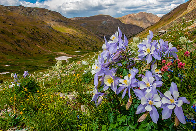 Nature's Palette, American Basin, CO