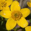 yellow flower               211