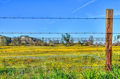 wildflowers_6730