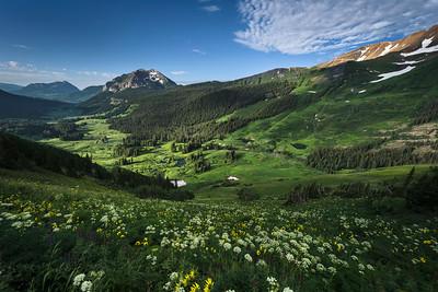 Summer Wildflowers in Gothic Valley