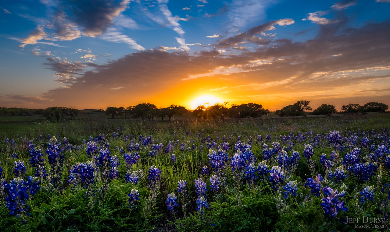 Traditional Bluebonnet Sunburst 2018 BETTER-Edit