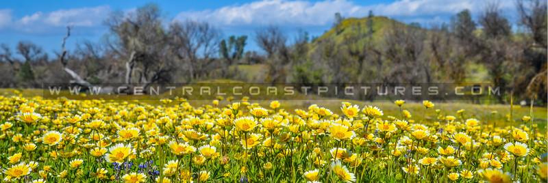 pano-slo wildflowers_3466