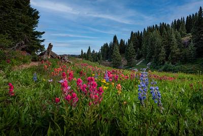 Shrine Ridge Bouquet