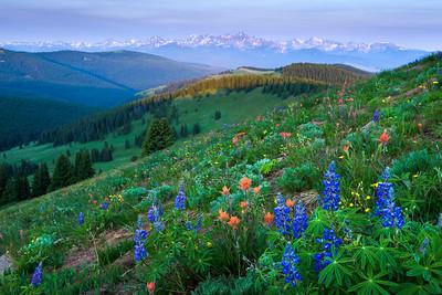 Shrine Ridge -Wildfire Wildflowers