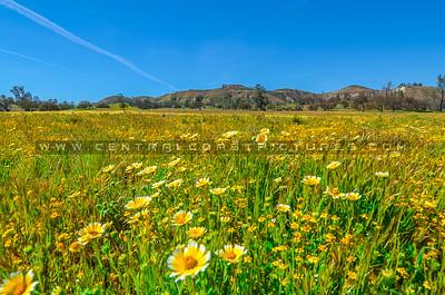 wildflowers-3339