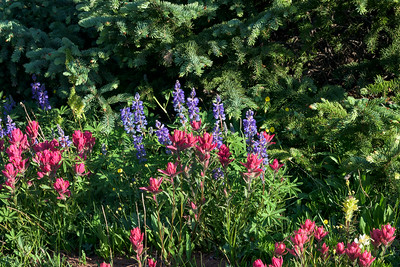 Paint Brush - Lupine Party