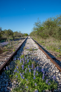 Bluebonnets along a decommissioned railroad track near Llano, Texas