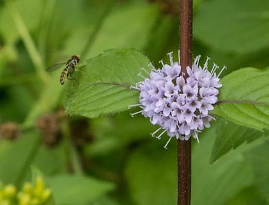 wildflower     sm     311