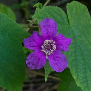 wildflower     sm     111