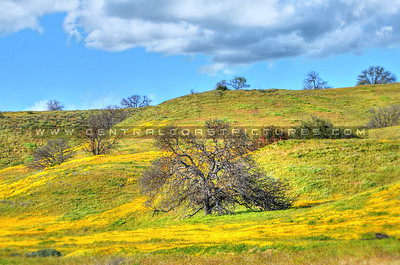 oak tree wildflowers 3534