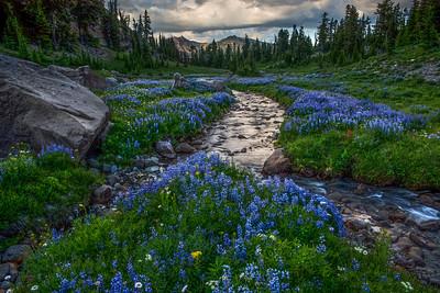 Mountain Wild Flowers, Cascade Range, Washington