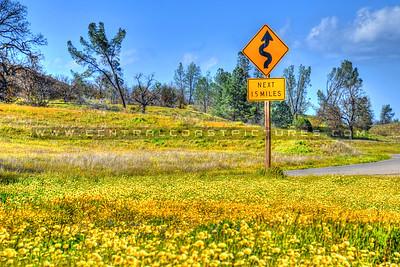 wildflowers 3479-