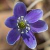 flower          510