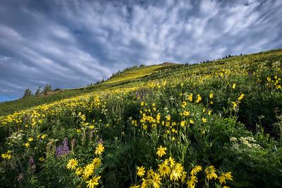 Wildflower Ridge - Gothic