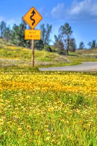 wildflowers 3480-