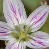 flower         1210
