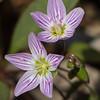 flower         1910