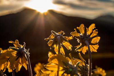 'Til We Meet Again, Crested Butte, CO