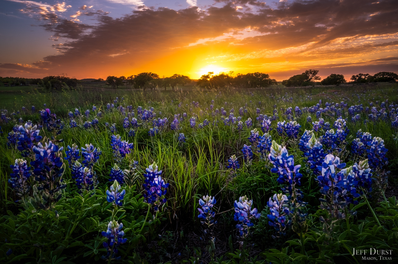 Bluebonnet Orange Sunset 2018 BETTER