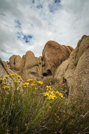 Alabama Hills Flowers 2