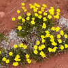 Yellow wildflowers at Fisher Towers near Moab, Utah.