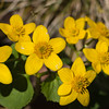 yellow flowers10