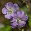 flower            311